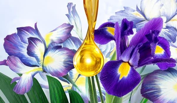 Запах цветов ириса: свойства аромата
